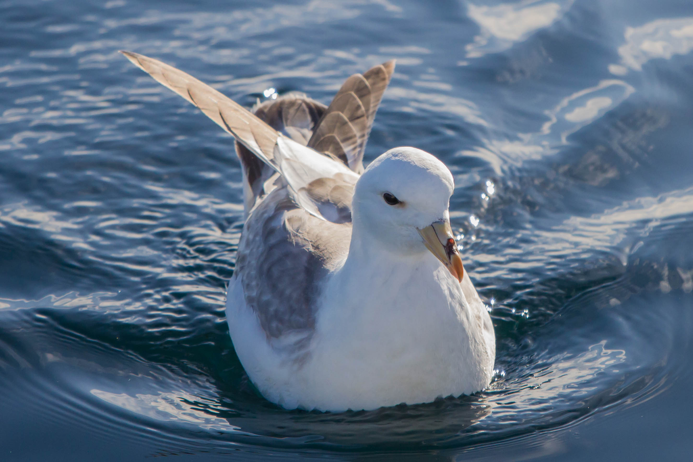 "Which seabird was named after the old Viking word for ""foul""?"