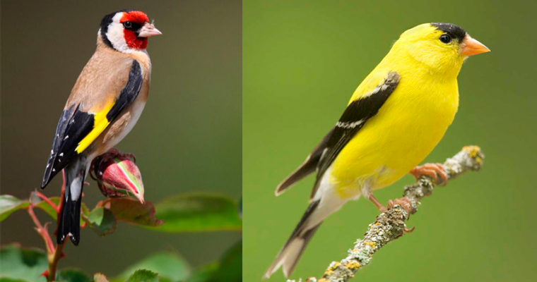 Which bird is supposedly colored by the blood of Jesus?