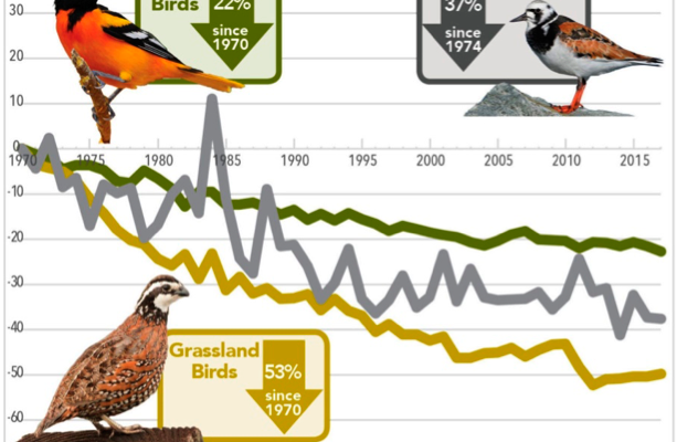 <b>The Alarming Population Decline among Wild Birds, with Special Attention given to the Eurasian Skylark and the American Bobolink</b>