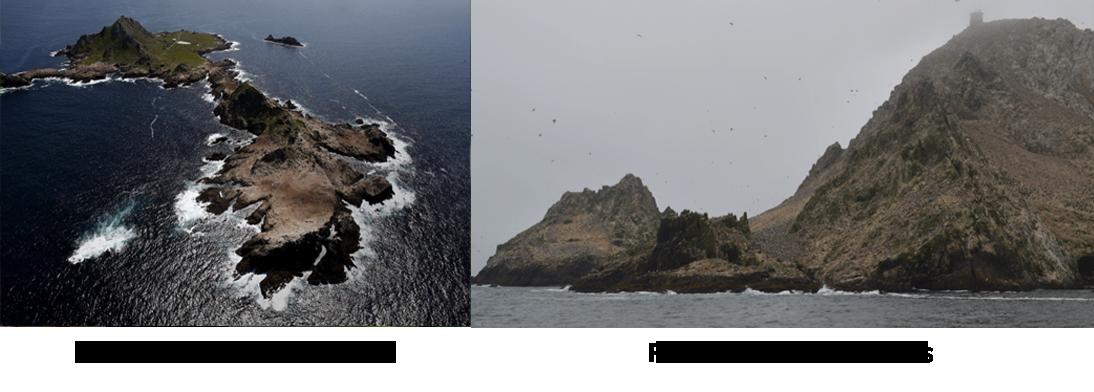 The July 2021 Pelagic Bird Spotting Experience for a Struggling Bird Identifier