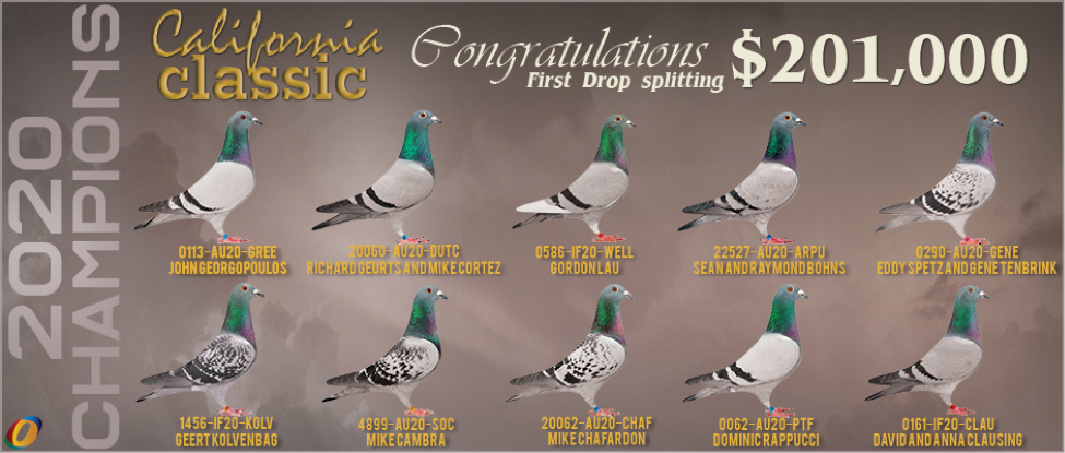 California Classic Pigeons