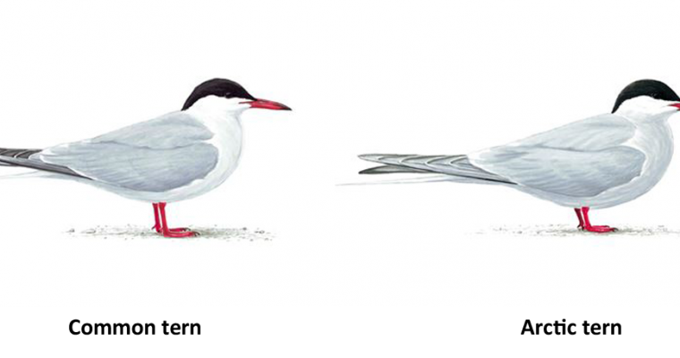 Coming to Terms with Terns
